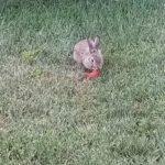 I learned that rabbits really like apple peels.